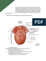 Anatomi
