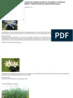 Modo de Siembra Plantas Acuáticas