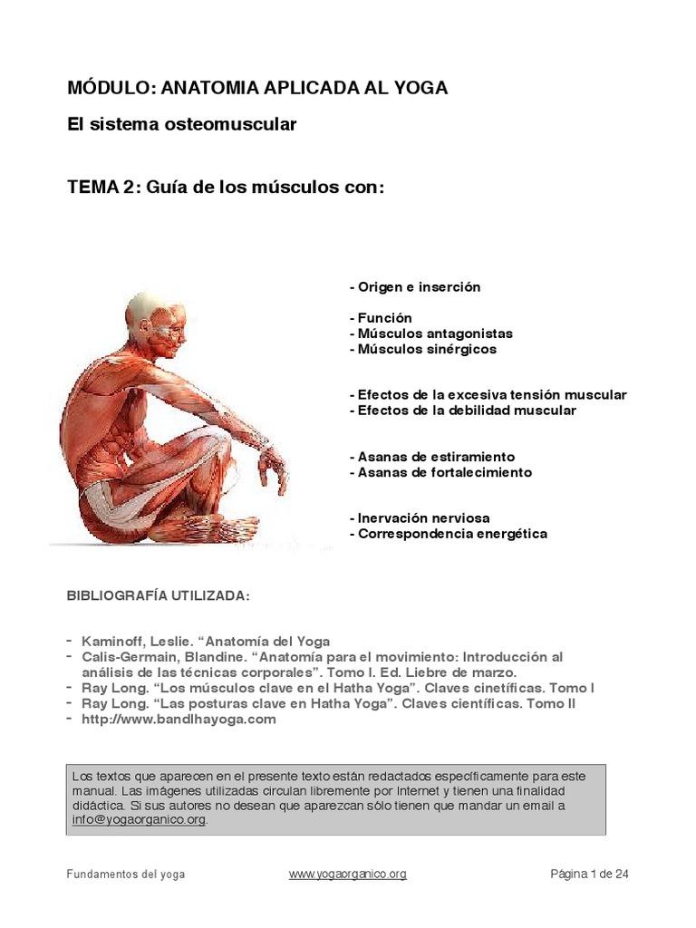 TEMA-2-Guía-de-los-músculos