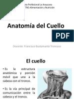 2. Anatomía de Cuello