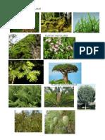 Plantas No Vasculares