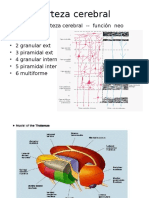 Corteza cerebral SISTEMA DE CONSIENCIA.pptx