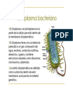 U2i_CitoplasmaBacteriano_19426.pdf