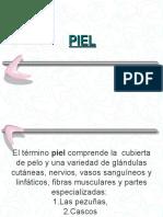 10ºPIEL y GLANDULA (2).ppt