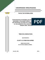 Caracterización Morfológica de Dos Ectomicorrizas Asociadas a Coccoloba Uvifera e Identificación Del Micobionte Con Base en La Región ITS Del ADNr, Población de La Comunidad La Ribera, Tampico Alto, Veracruz