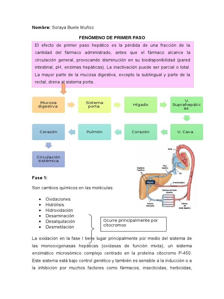 Ecuacion metabolismo basal