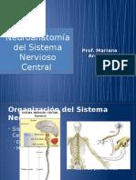 Neuroanatomia Del Sistema Nervioso Central