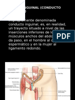 regininguinalconductoinguinal-140128174357-phpapp01