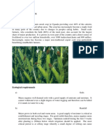MAIZE Production Guide.doc