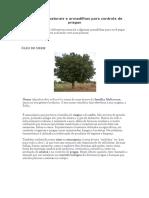 Defensivos naturais e armadilhas para controle de pragas.docx