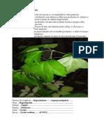 Planşa Pentru Atlasul Botanic Cu Utilizări În Biotehnologii (1) (1)