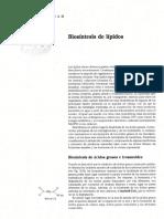 sintesis de lipidos.pdf