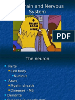 Chapter 2_The Brain