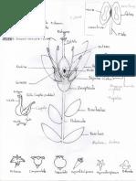 Morfologia Vegetal - Flor002