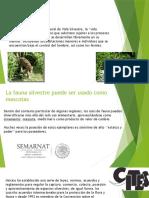 fauna como mascota - copia.pptx