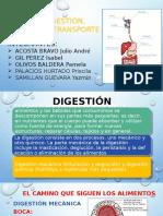 digestión-absorción-y-transporte-1.pptx