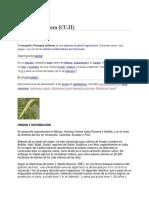 Caesalpinia coriaria.pdf