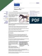 BBC Mundo Ciencia y Tecnología El Secreto Del Caballo de Carrera