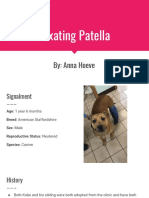 luxating patella  1