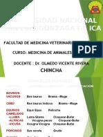 Medicina Animales Mayores 2017