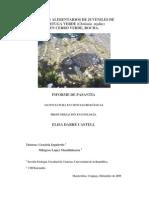 Hábitos Alimenticios de Juveniles de Tortuga Verde (Chelonia mydas) en La Coronilla (Rocha) Uruguay.