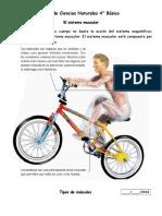 guia sistema muscular 4°.docx