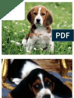 Los 10 Mandamientos de Una Mascota (perros)