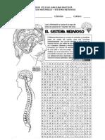 Sopa de Letras Sistema Nervioso