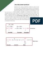 Ciclo Acido Glioxi via Pentosas 1ra Parte (1)