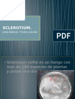 SCLEROTIUM