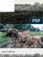 deforestation -810 group 4