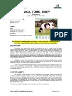 Ficha Vacas, Toro, Buey _bos Taurus