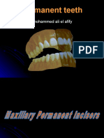 permanentteeth-.ppt