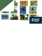 Flora y Fauna de Las Ecoregiones