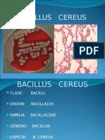 8 Bacillus Cereus (1)
