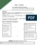 Guia de Las Plantas Estructura y Funcion de Las Partes de Las Plantas.