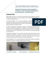 Practica de Entomologia Agricola Rinconazo 2017