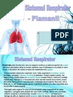 Sistemul Respirator, Plamanii