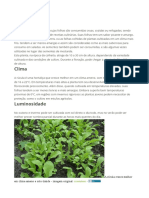 Plantar Rucula