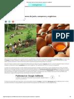 Diferencias Entre Los Huevos de Jaula, Camperos y Orgánicos