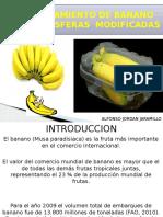 ATMOSFERA MODIFICADA EN BANANO DIAPOSITIVAS INTELIGENCIA ARTIFICIAL.pptx