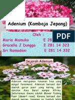 ppt Adenium