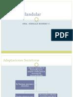Epitelio Glandular Presentacion