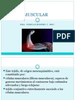 Tejido Muscular Presentacion