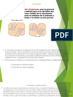 Citocinesis