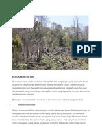 Mengenal Ekosistem Hutan