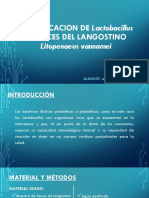 Identificacion de Lactobacillus Aislado Del Intestino de Litopenaeus V