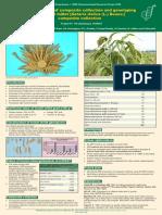 Development of Composite 2006