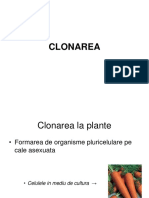 CLONAREA.pdf