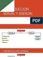 19. Reproduccion Sexual y Asexual